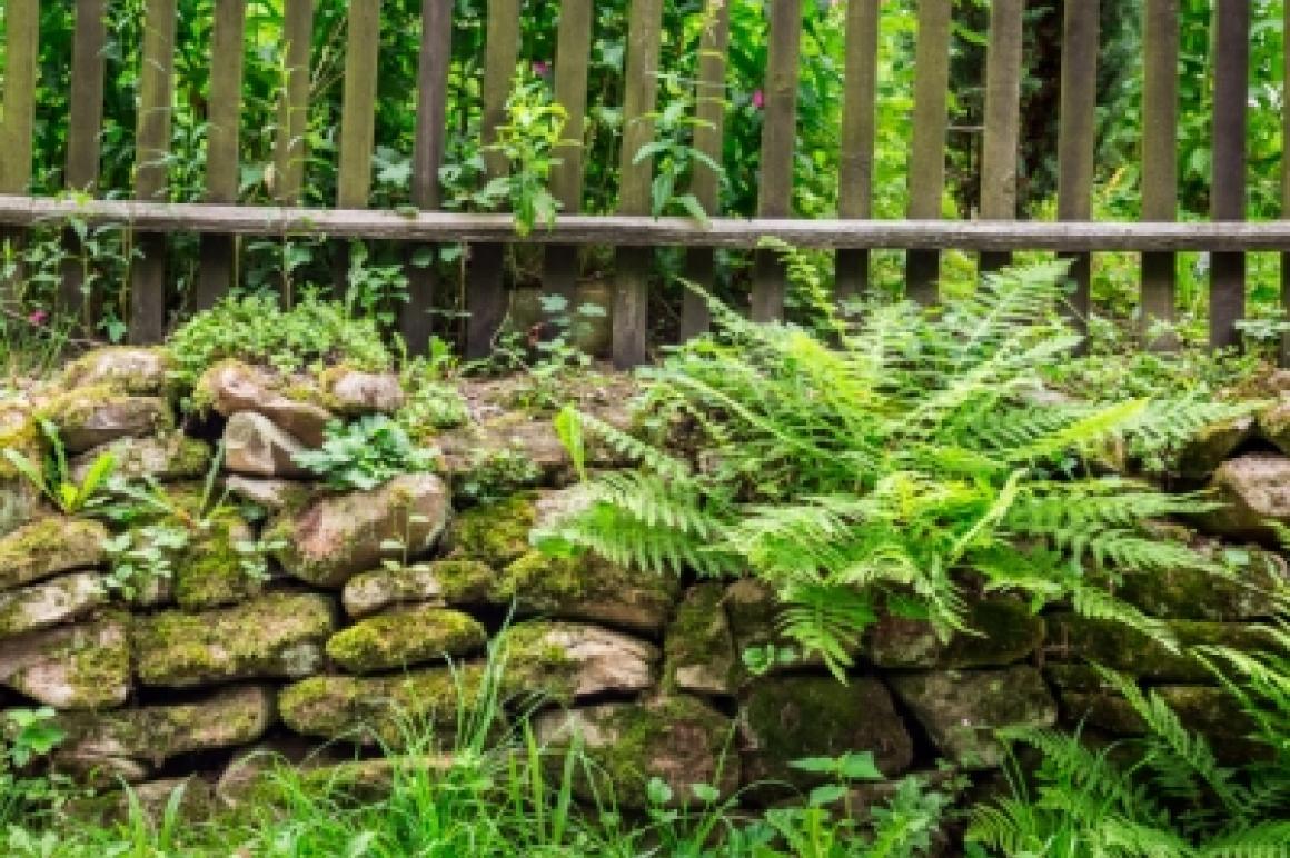 Verwilderde tuin
