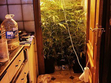 Wietplantage in woning